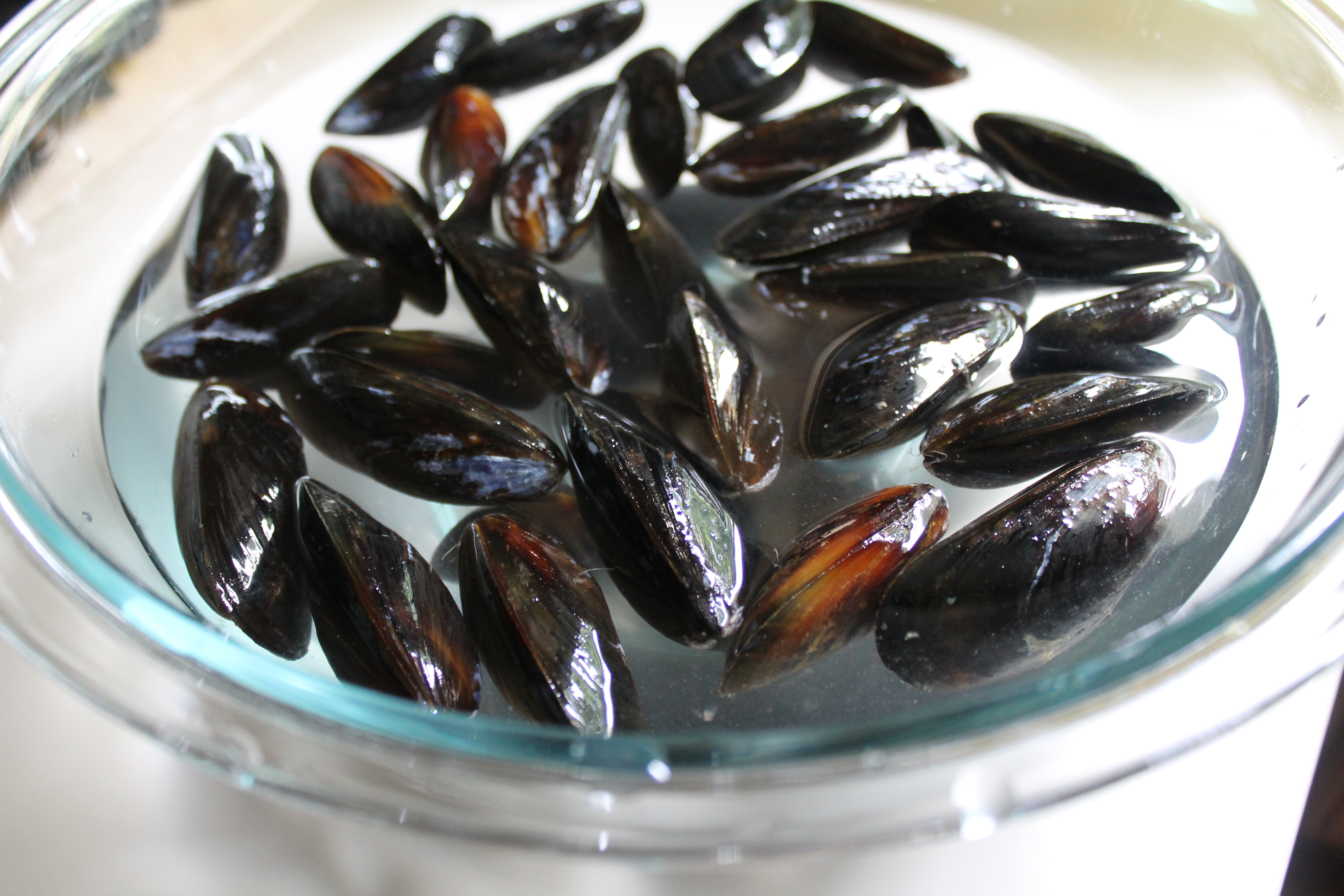 Mussel Bath